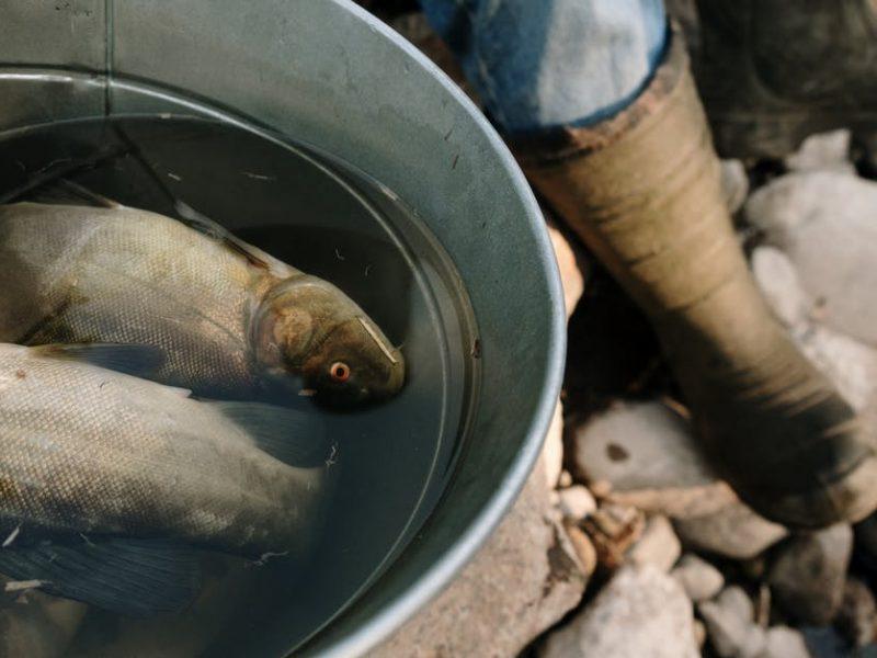 Apprendre la pêche à la carpe, le guide complet