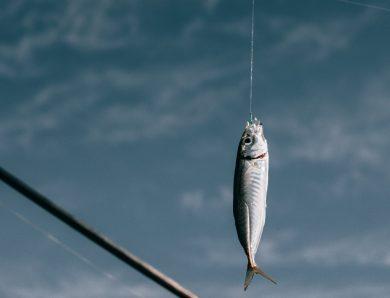 Pêcher la truite : techniques et conseils